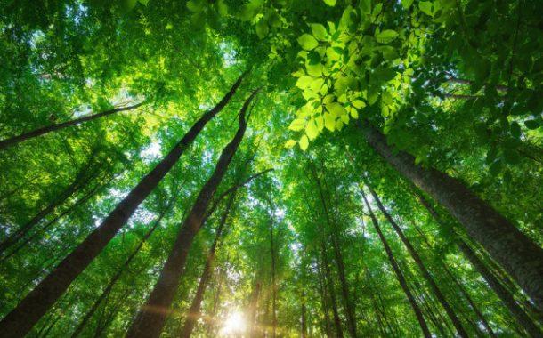Ministério do Meio Ambiente suspende convênios e parcerias com ONGs por três meses