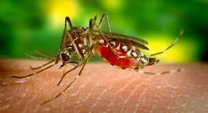 Casos de dengue em SP aumentam mais de 2.100%, diz Ministério da Saúde