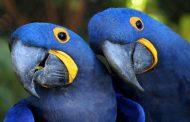 Um milhão de espécies de plantas e animais estão ameaçadas de extinção, aponta ONU