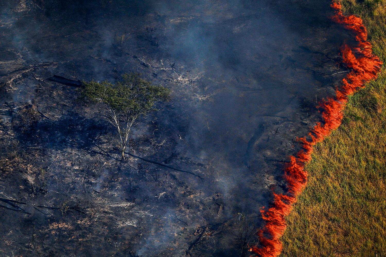 Retomada de repasses ao Fundo Amazônia deve ser anunciada nos próximos dias, diz governador