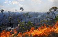 Queimadas na Amazônia são um problema para o mundo