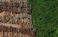 Terras indígenas têm alta de 74% no desmatamento; área mais afetada protege povo isolado