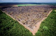 Área com alerta de desmatamento na Amazônia sobe 85% em 2019 ante 2018, segundo o Inpe