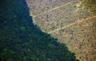 Alertas de desmatamento na Amazônia crescem 51,45% no primeiro trimestre, mostram dados do Inpe