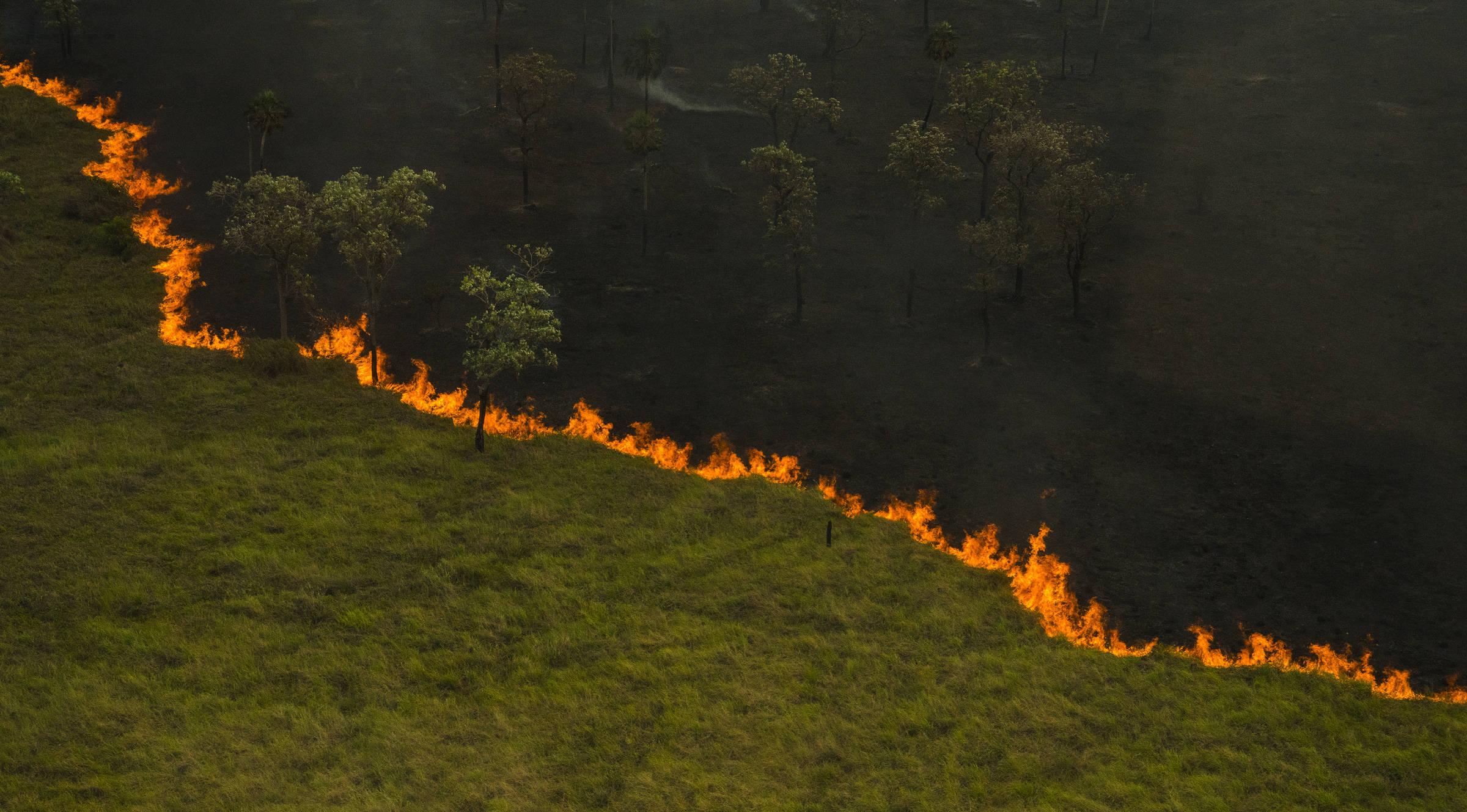 Saiba como os incêndios na Amazônia causam impacto direto no Pantanal